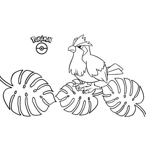 pokemon pidgey coloring book